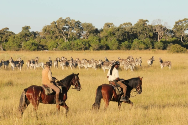 Horse Riders and Zebra