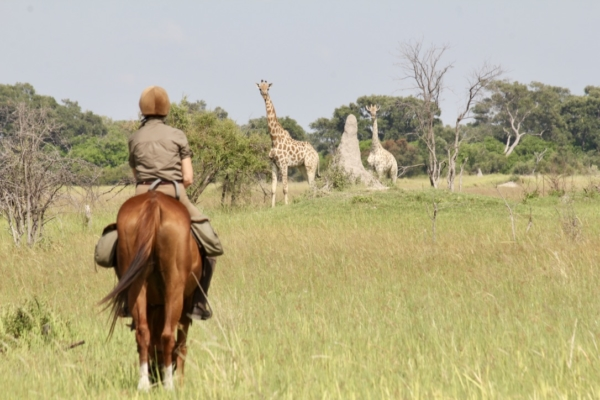 Giraffe encounters on horseback