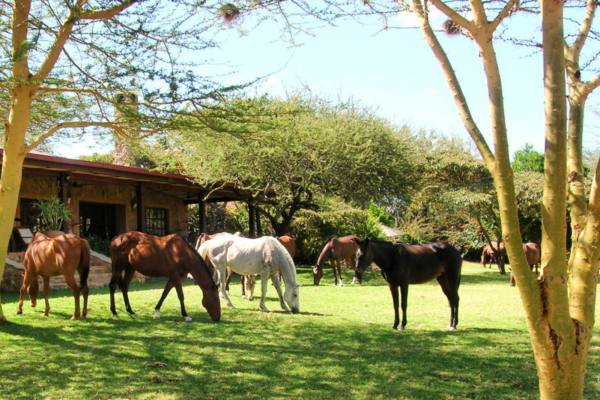 Horses in front of lodge