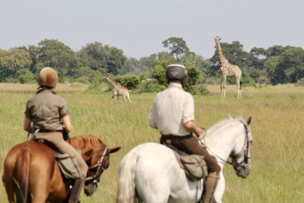 Two horseback riders watching giraffe