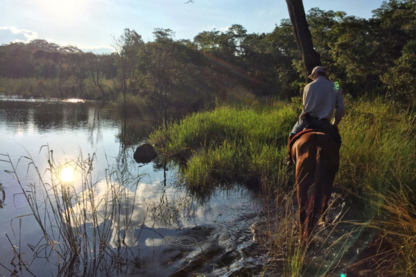 Trail rides in the bush