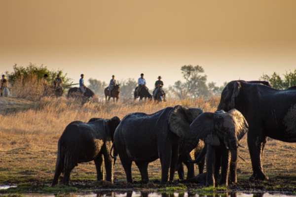 Horse riding with elephants in the Okavango Delta