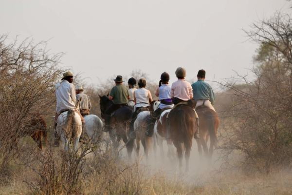 Group of horses riding between thorn bushes in dust