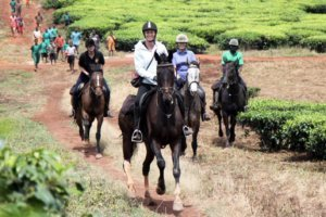Horses galloping through the Ugandan farmlands