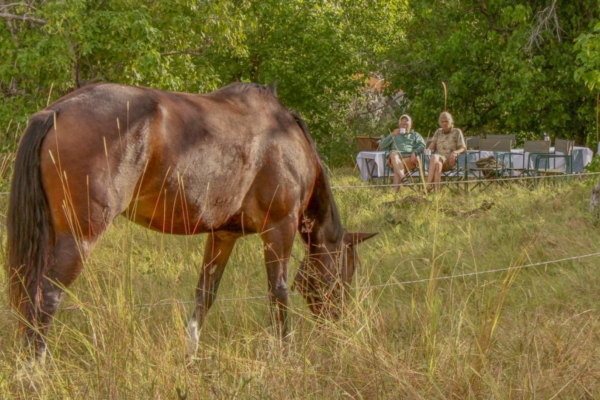 Grazing horse with picnic in background