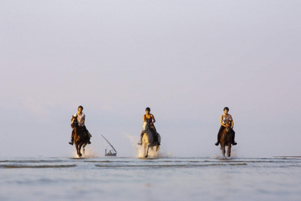 Three horses galloping in water