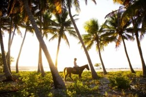 Horse riding between palmtrees