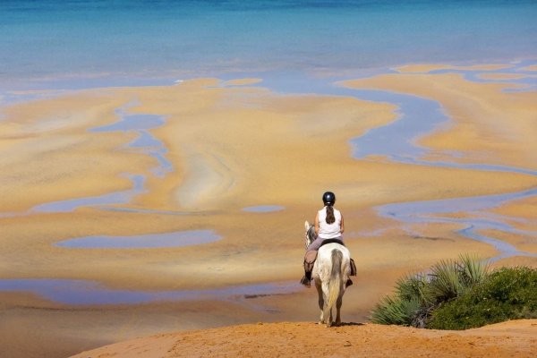 White horse on dune overlooking beach