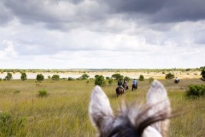 Through horses ears to horse riding in estuary
