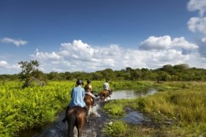 Horse riding in Mozambique