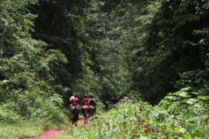 Horseback riders entering the Mabira Rain Forest in Uganda