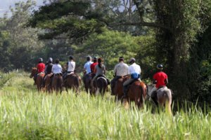Group of horse riders walking through long grasses before entering the Ugandan Rain Forests