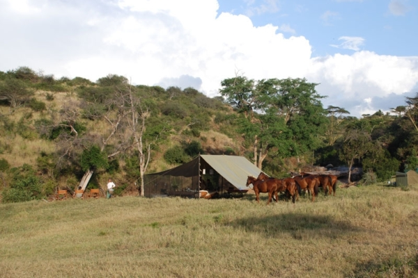 Horses at the fly camp