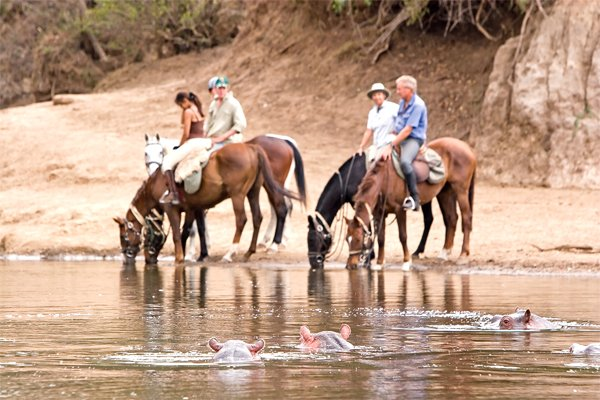 Hippos and Horses