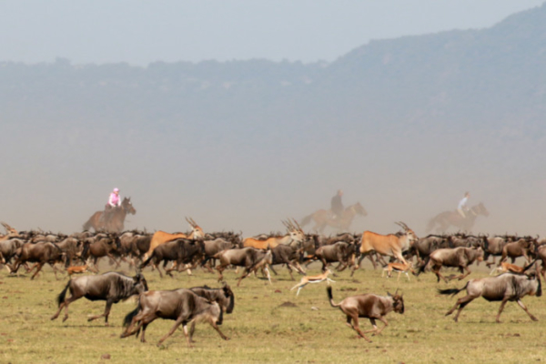 horse riding with Wildebeest