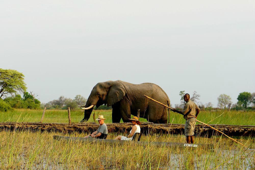 Mokoro and elephant in Okavango Delta