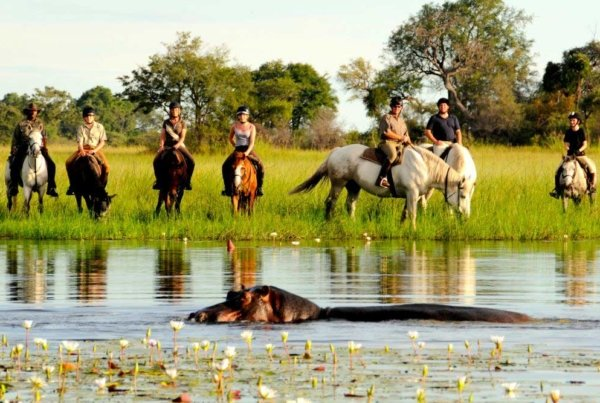 Okavango Delta horse riding with hippos