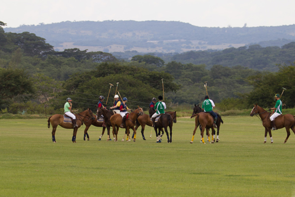 Polo for experienced and beginner riders