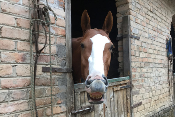 Top class stables and happy horses