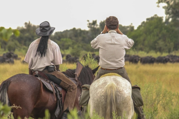 Two horse riders watching a buffalo herd