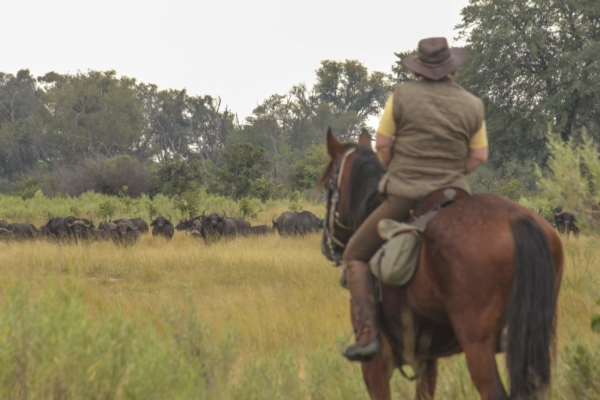 Horse rider watching buffalo on safari