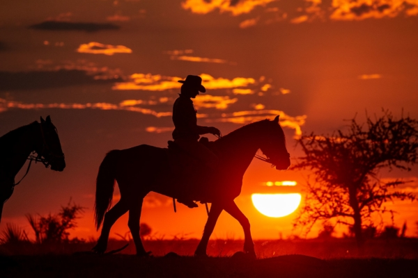 Cowboy riding at red sunset