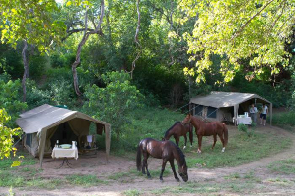 horses grazing in front of tented camp