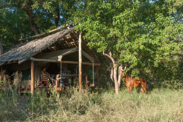 Tented camp with horse