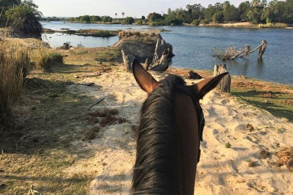 horse looking over river