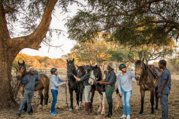 Horses ready to be ridden standing under trees in Zimbabwe