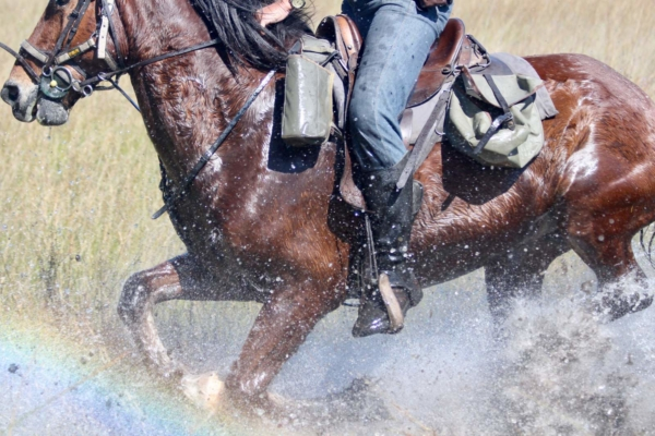 Close up of horseback rider cantering through water