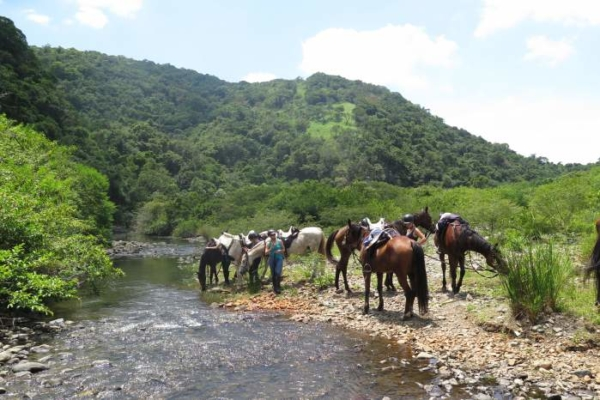 Trail horses next to river