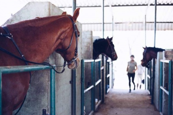 Horses looking out of stable doors
