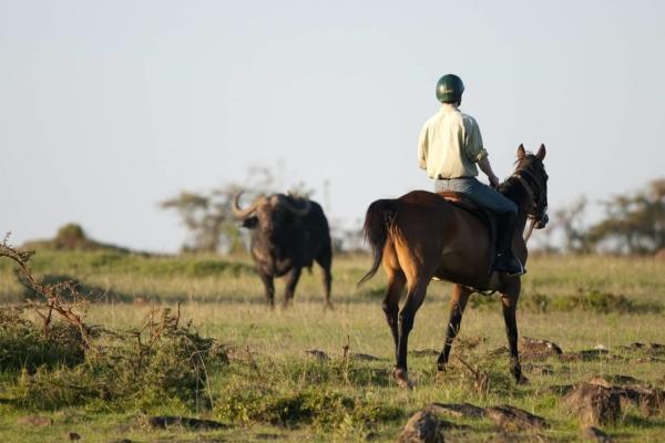 horse riding with buffalo