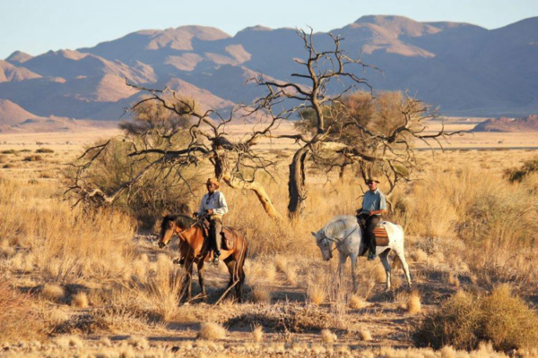 Safari horses in Namib Desert