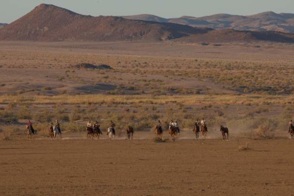 Line of horses galloping in desert