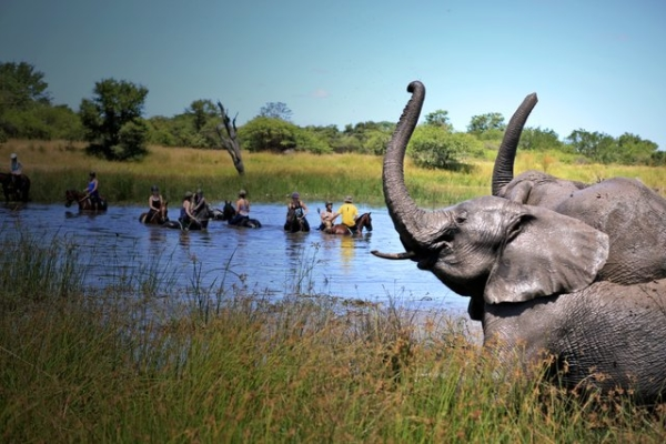 Horseback swims with elephants