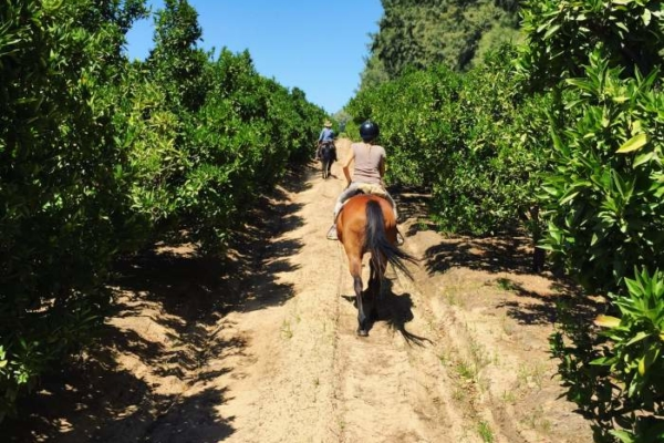 Vineyards and Fruit Orchids