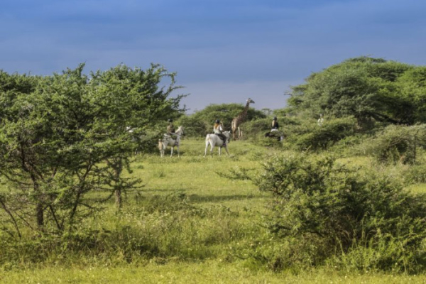 Chyulu Hills is home to a variety of wildlife including giraffe
