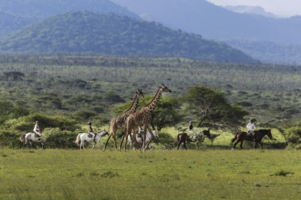 Horse riding with Giraffe in Kenya