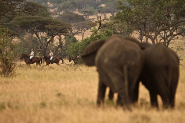 Elephant encounters on horseback