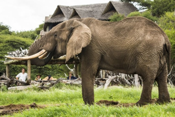 Elephants are regular visitors to the lodge