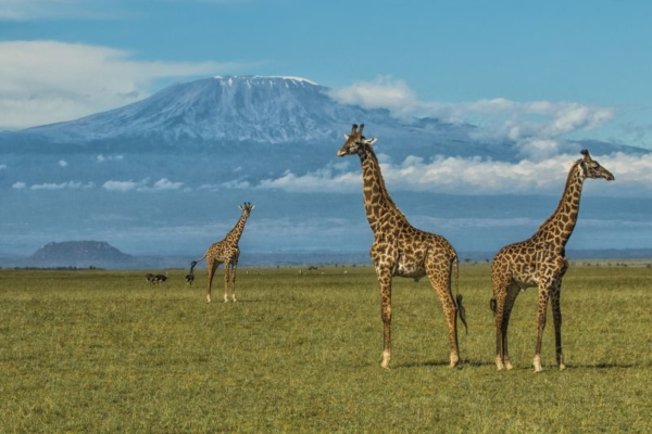 Mt Kilimanjaro is the backdrop to this wildlife haven