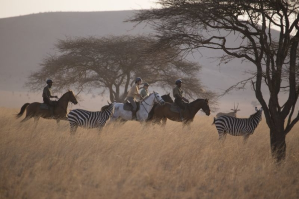 Chyulu Hills is home to a variety of wildlife including zebra