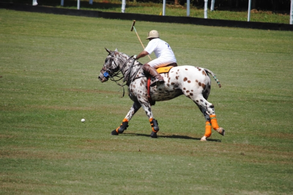play-polo-on-banks-of-nile18