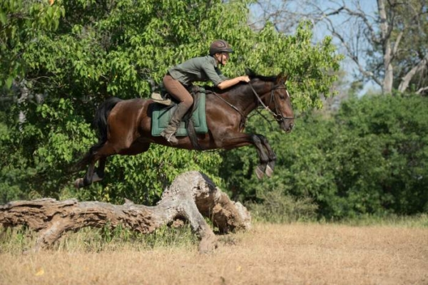 Horse rider jumping over fallen log
