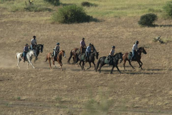 Horse riders galloping