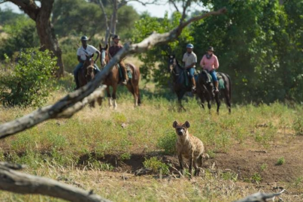 Horse riders seeing hyena