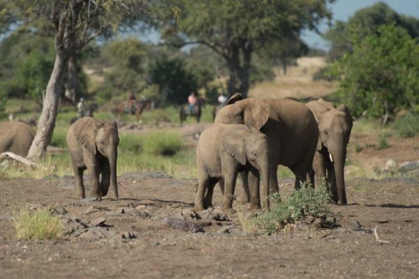The Tuli is home to large herds of gentle giants