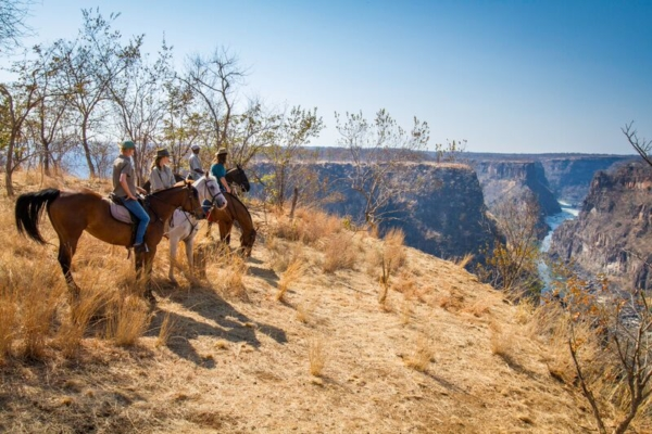 horses looking over canyon